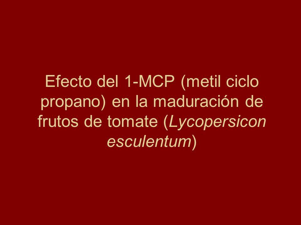 Efecto del 1-MCP (metil ciclo propano) en la maduración de frutos de tomate (Lycopersicon esculentum)