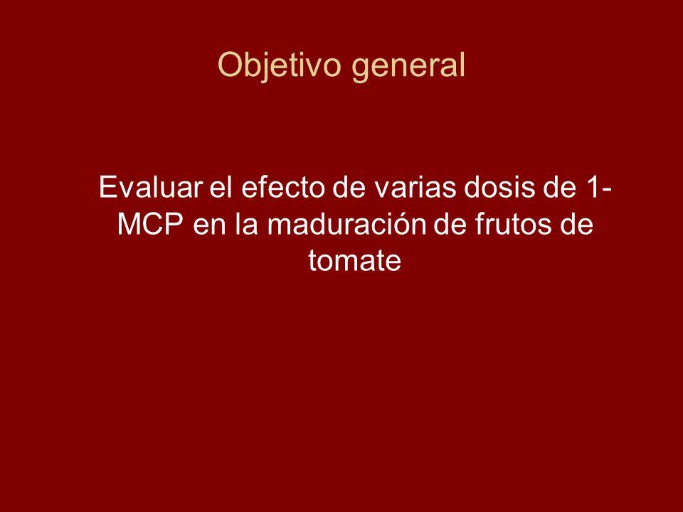 Objetivo general Evaluar el efecto de varias dosis de 1-MCP en la maduración de frutos de tomate