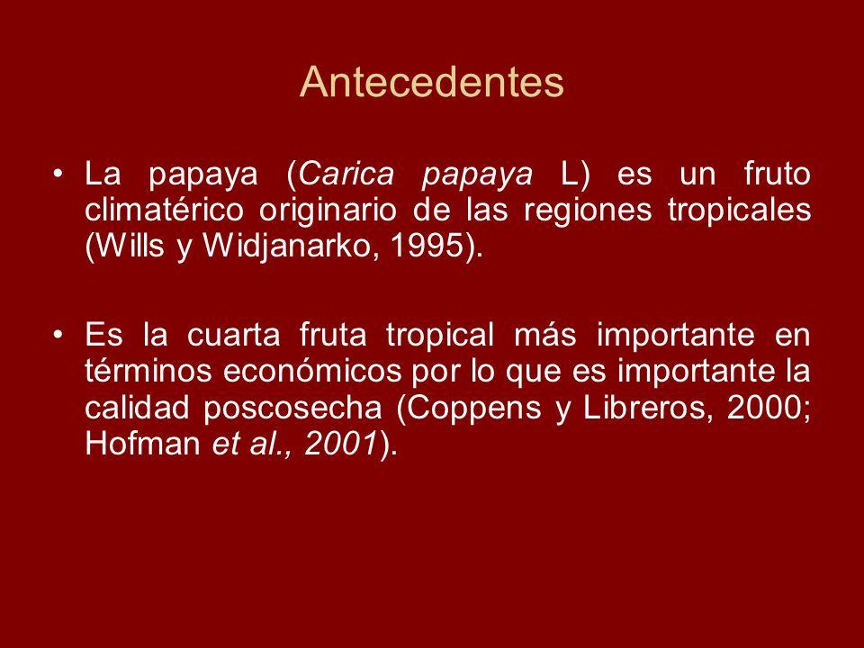 Antecedentes La papaya (Carica papaya L) es un fruto climatérico originario de las regiones tropicales (Wills y Widjanarko, 1995).