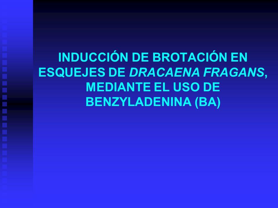 INDUCCIÓN DE BROTACIÓN EN ESQUEJES DE DRACAENA FRAGANS, MEDIANTE EL USO DE BENZYLADENINA (BA)