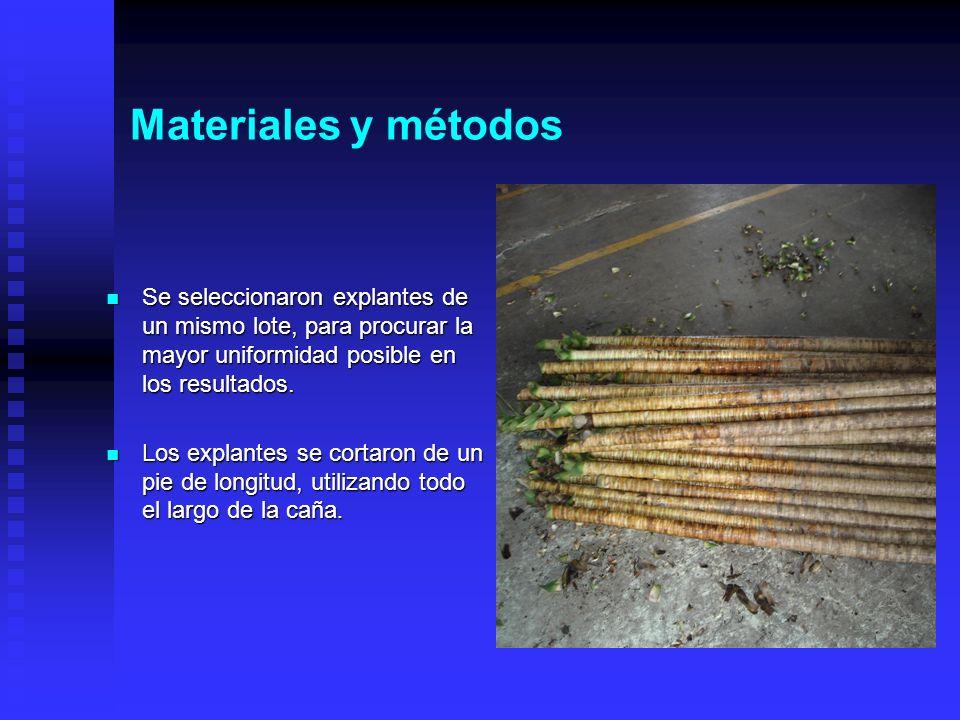 Materiales y métodos Se seleccionaron explantes de un mismo lote, para procurar la mayor uniformidad posible en los resultados.