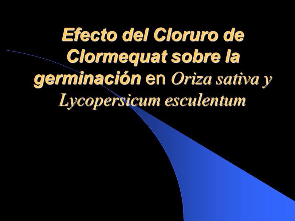 Efecto del Cloruro de Clormequat sobre la germinación en Oriza sativa y Lycopersicum esculentum