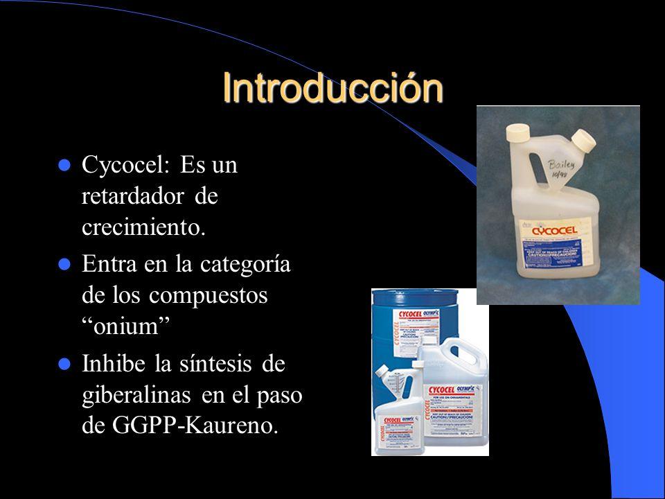 Introducción Cycocel: Es un retardador de crecimiento.