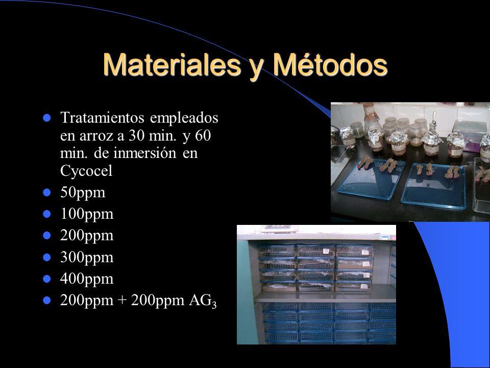 Materiales y Métodos Tratamientos empleados en arroz a 30 min. y 60 min. de inmersión en Cycocel. 50ppm.