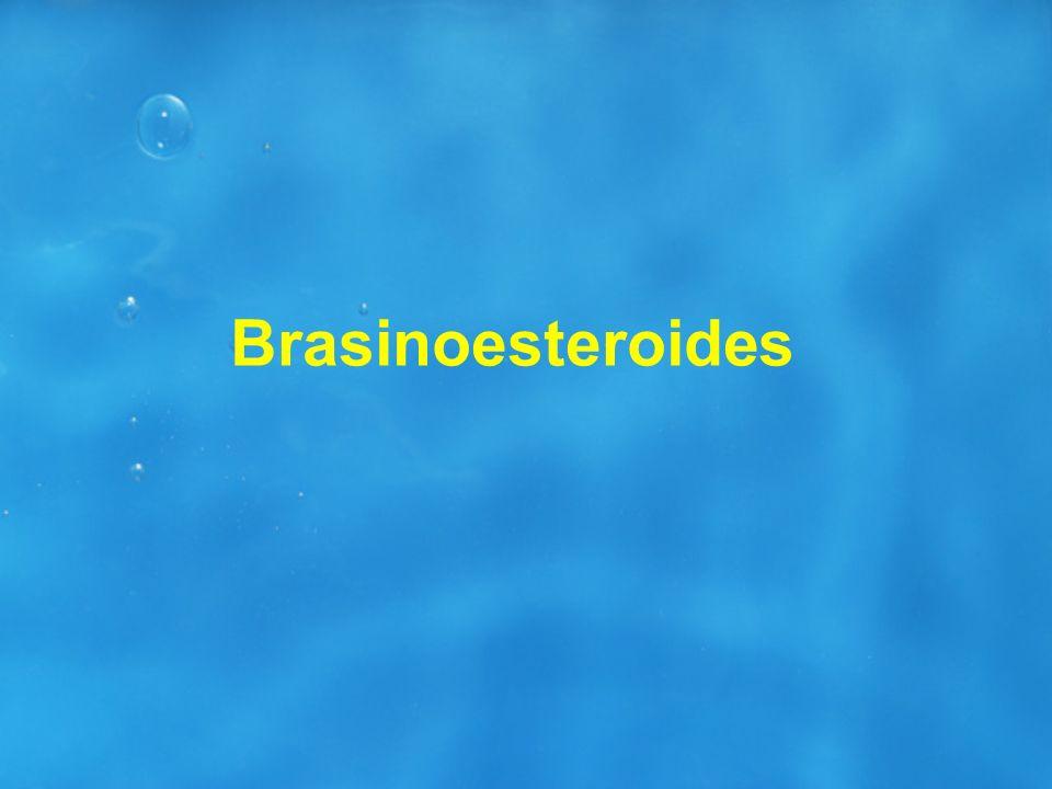 Brasinoesteroides