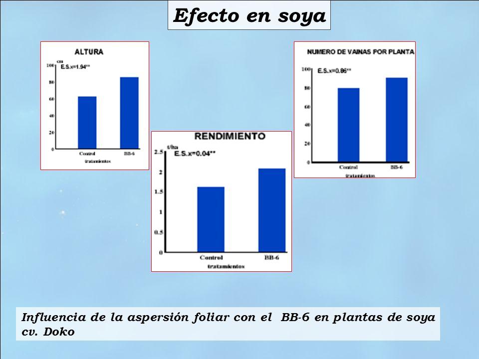 Efecto en soya Influencia de la aspersión foliar con el BB-6 en plantas de soya cv. Doko