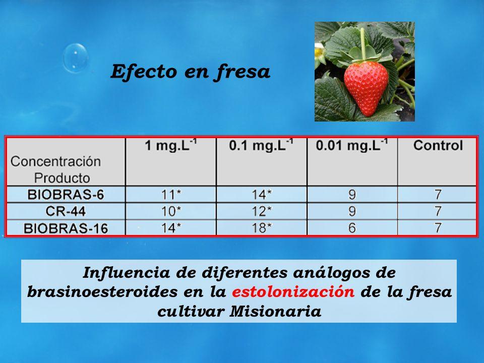 Efecto en fresaInfluencia de diferentes análogos de brasinoesteroides en la estolonización de la fresa cultivar Misionaria.