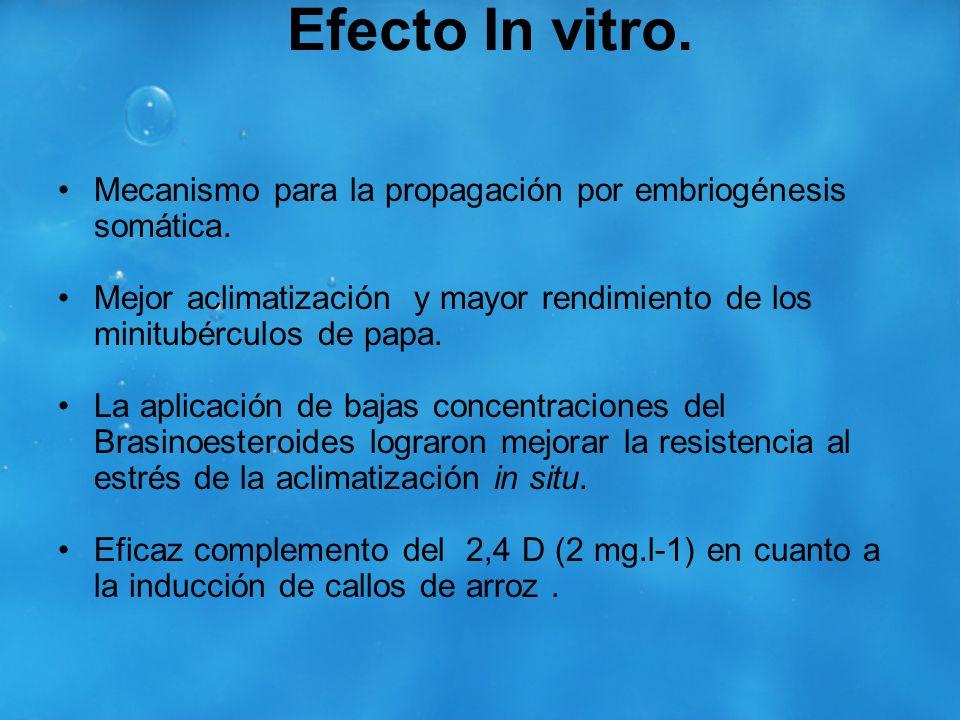 Efecto In vitro.Mecanismo para la propagación por embriogénesis somática. Mejor aclimatización y mayor rendimiento de los minitubérculos de papa.
