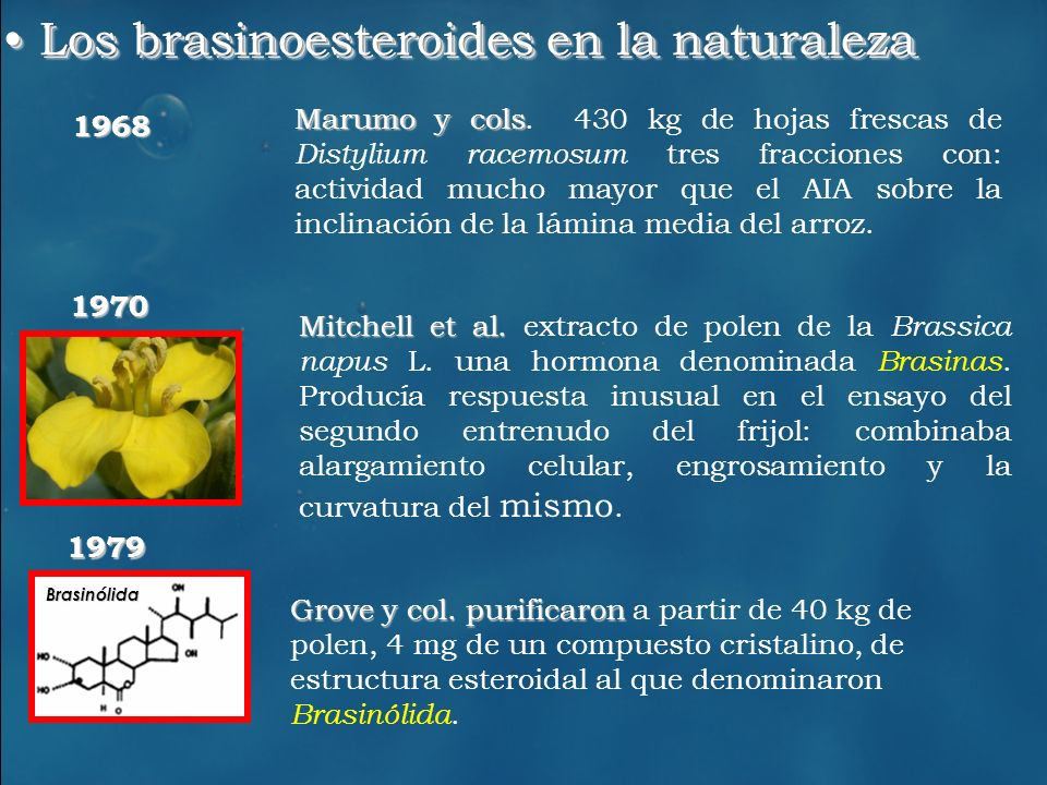 Los brasinoesteroides en la naturaleza