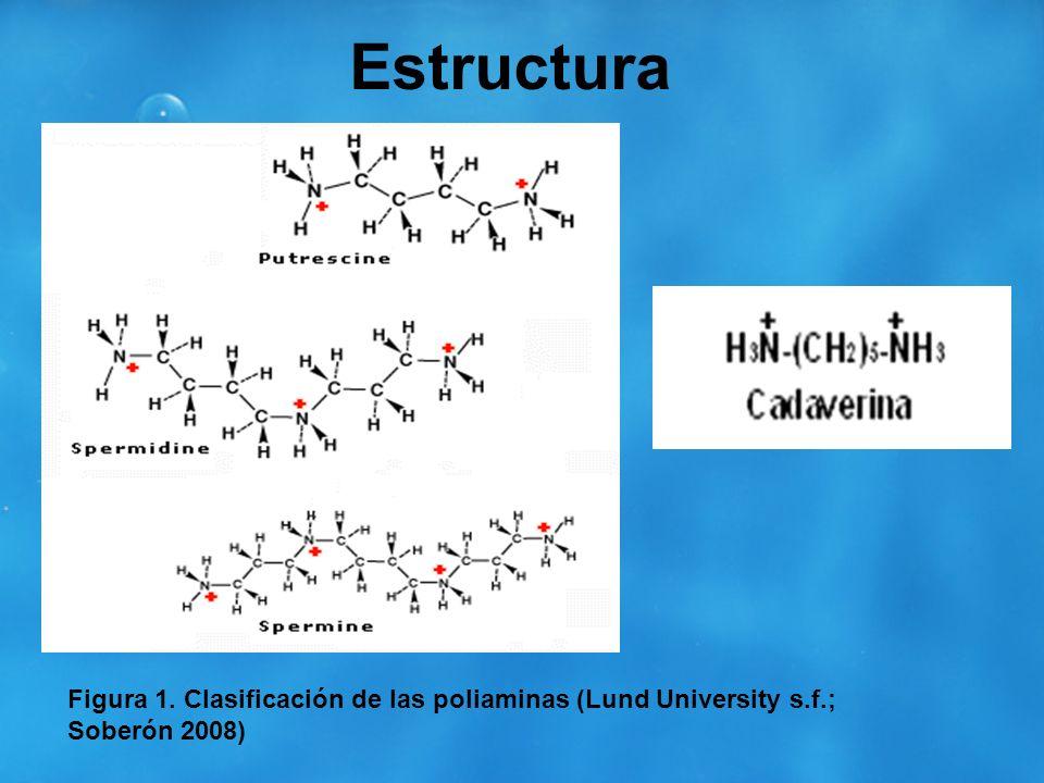 Estructura Figura 1. Clasificación de las poliaminas (Lund University s.f.; Soberón 2008)