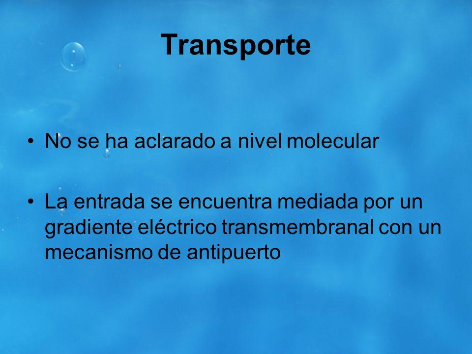 Transporte No se ha aclarado a nivel molecular
