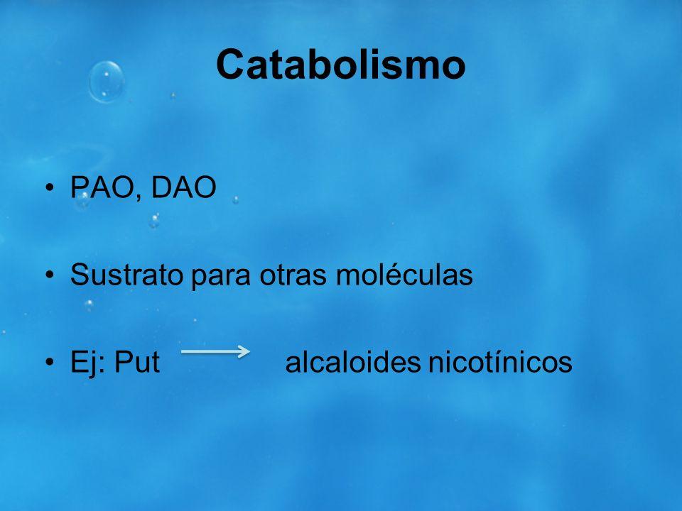 Catabolismo PAO, DAO Sustrato para otras moléculas