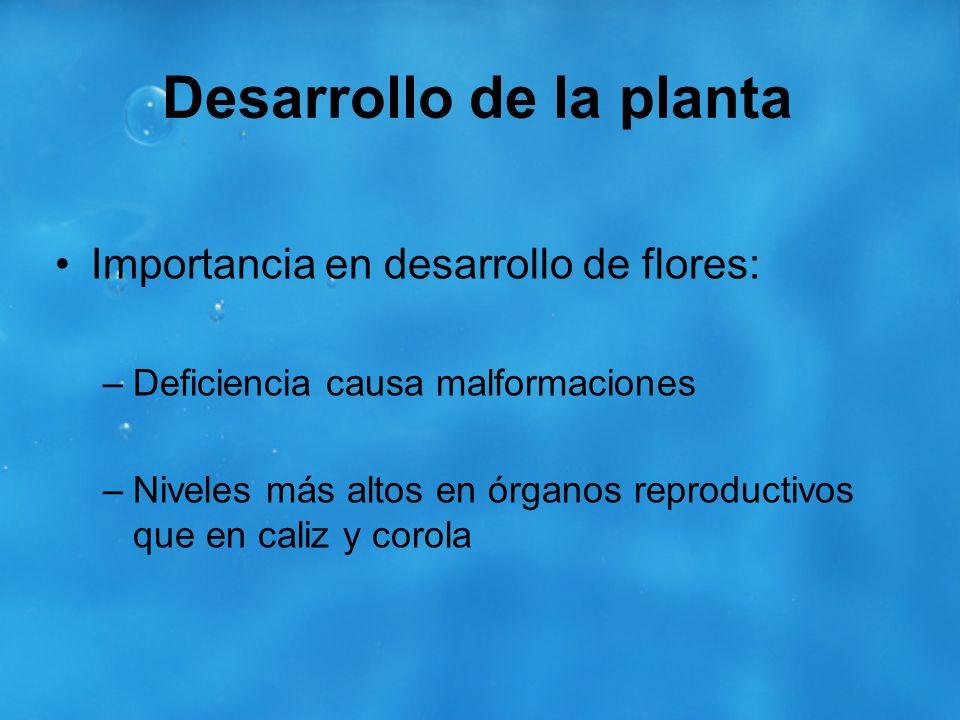 Desarrollo de la planta