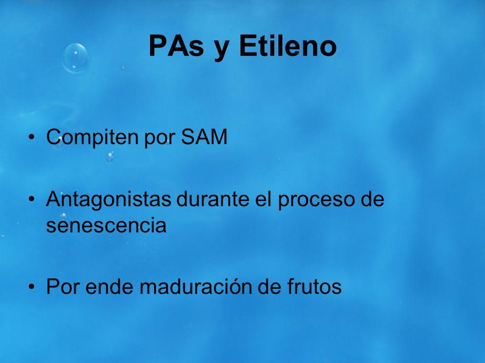 PAs y Etileno Compiten por SAM