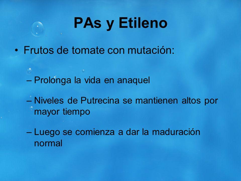PAs y Etileno Frutos de tomate con mutación: