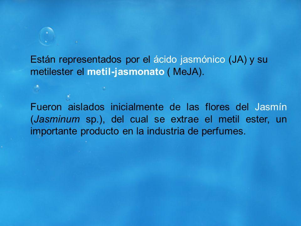 Están representados por el ácido jasmónico (JA) y su metilester el metil-jasmonato ( MeJA).
