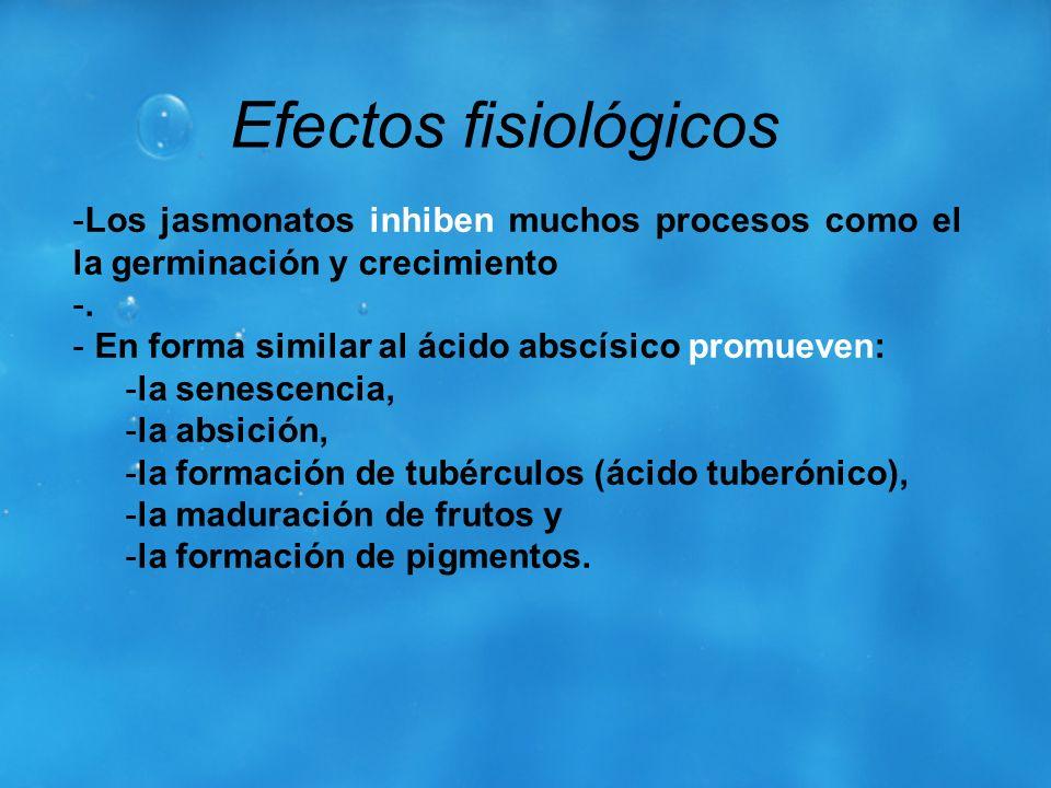 Efectos fisiológicosLos jasmonatos inhiben muchos procesos como el la germinación y crecimiento. . En forma similar al ácido abscísico promueven: