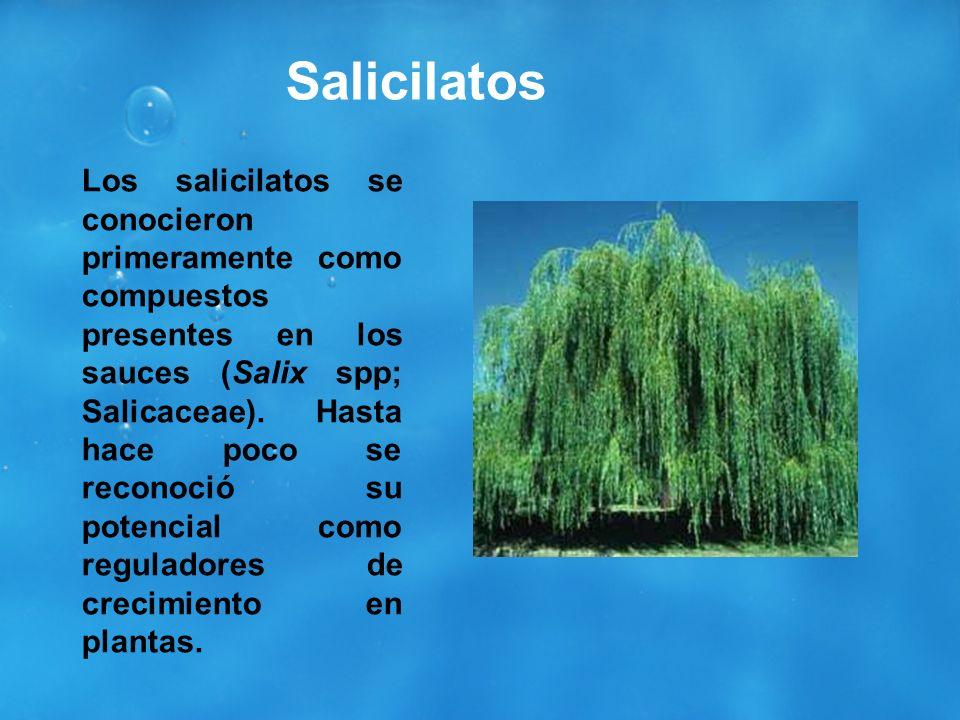 Salicilatos