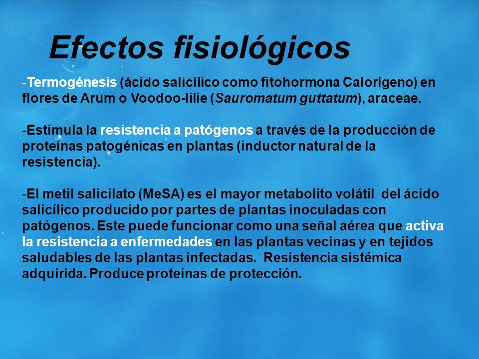 Efectos fisiológicosTermogénesis (ácido salicílico como fitohormona Calorígeno) en flores de Arum o Voodoo-lilie (Sauromatum guttatum), araceae.