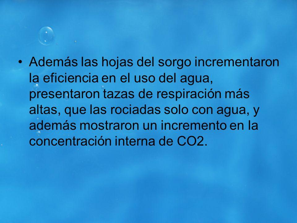 Además las hojas del sorgo incrementaron la eficiencia en el uso del agua, presentaron tazas de respiración más altas, que las rociadas solo con agua, y además mostraron un incremento en la concentración interna de CO2.