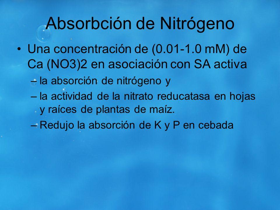 Absorbción de Nitrógeno