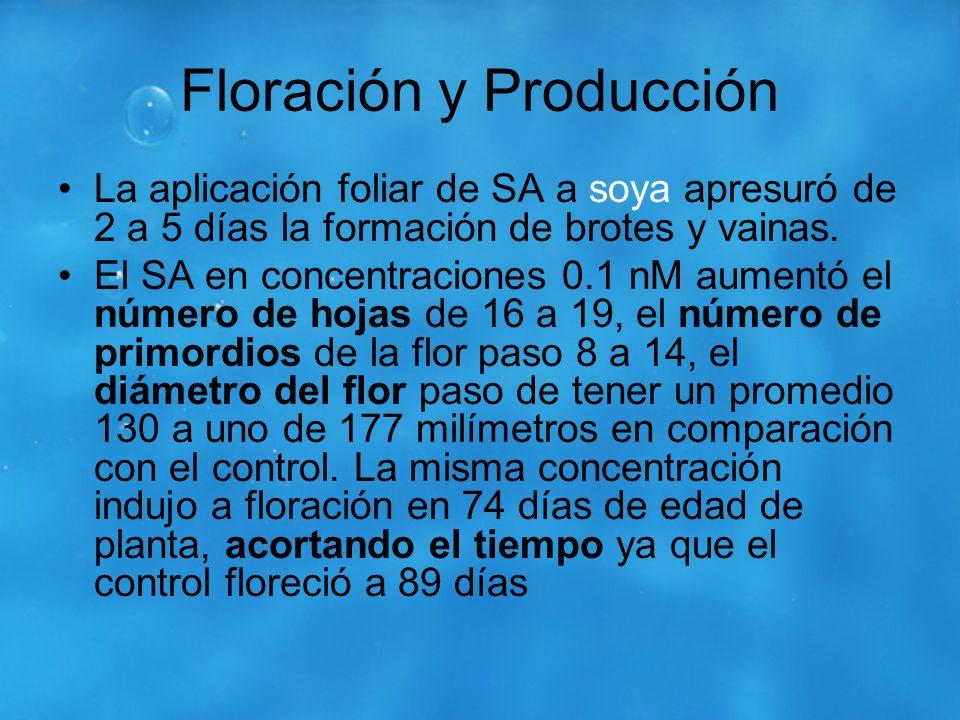 Floración y Producción