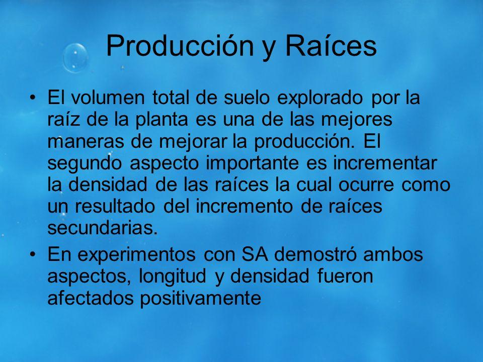 Producción y Raíces