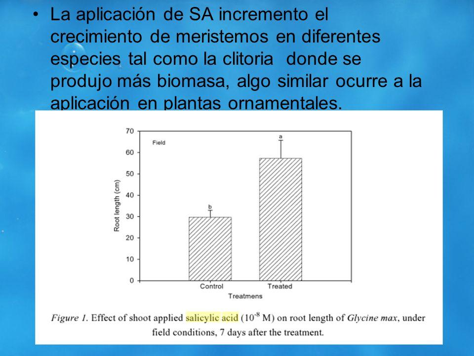 La aplicación de SA incremento el crecimiento de meristemos en diferentes especies tal como la clitoria donde se produjo más biomasa, algo similar ocurre a la aplicación en plantas ornamentales.