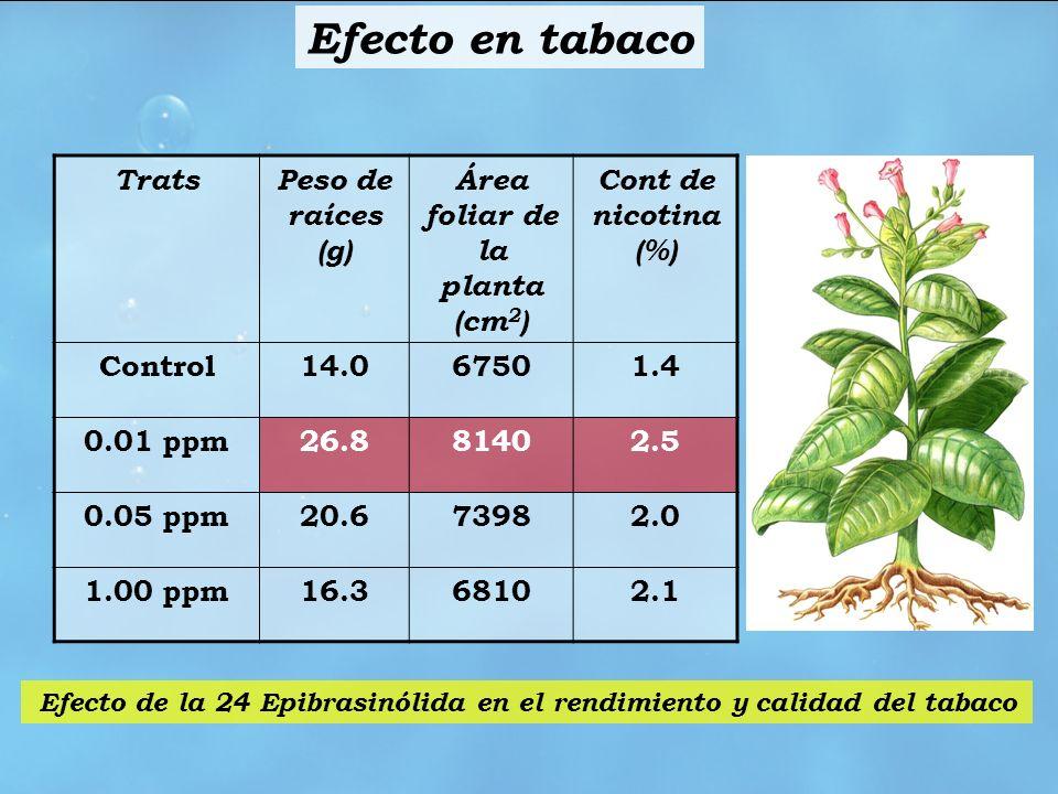 Efecto en tabaco Trats Peso de raíces (g)