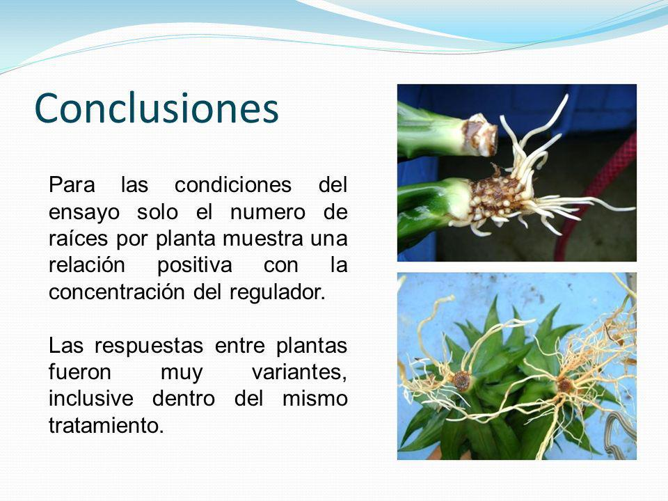 Conclusiones Para las condiciones del ensayo solo el numero de raíces por planta muestra una relación positiva con la concentración del regulador.