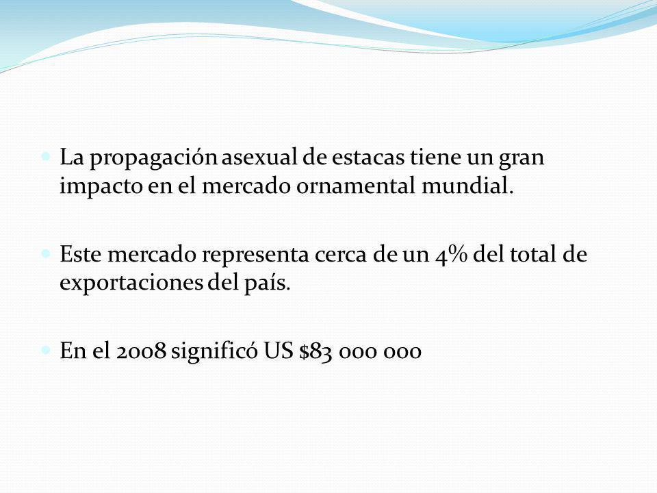 La propagación asexual de estacas tiene un gran impacto en el mercado ornamental mundial.