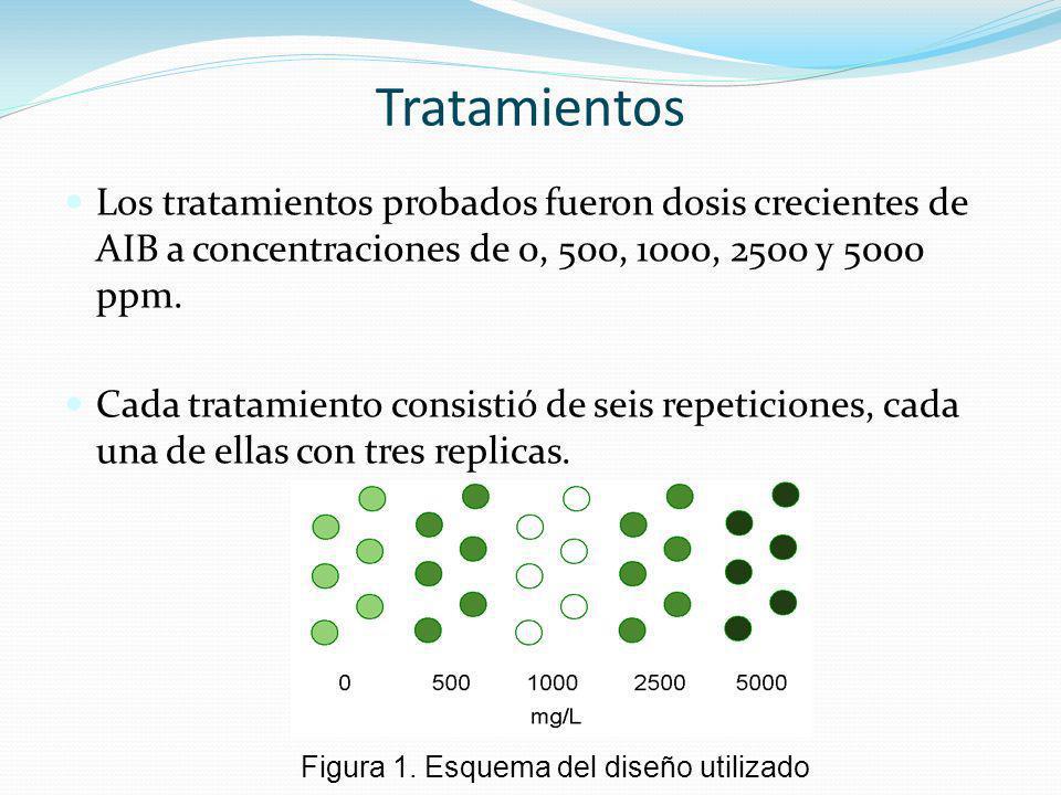 Tratamientos Los tratamientos probados fueron dosis crecientes de AIB a concentraciones de 0, 500, 1000, 2500 y 5000 ppm.