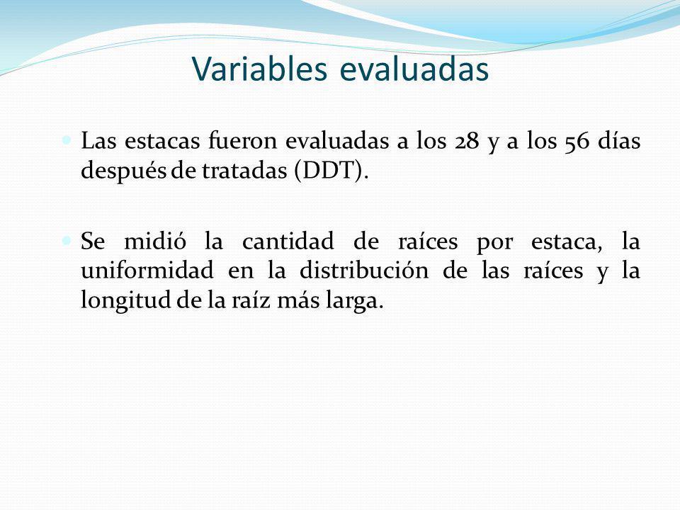 Variables evaluadasLas estacas fueron evaluadas a los 28 y a los 56 días después de tratadas (DDT).