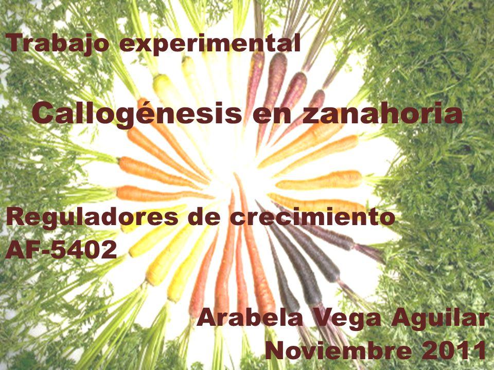 Callogénesis en zanahoria