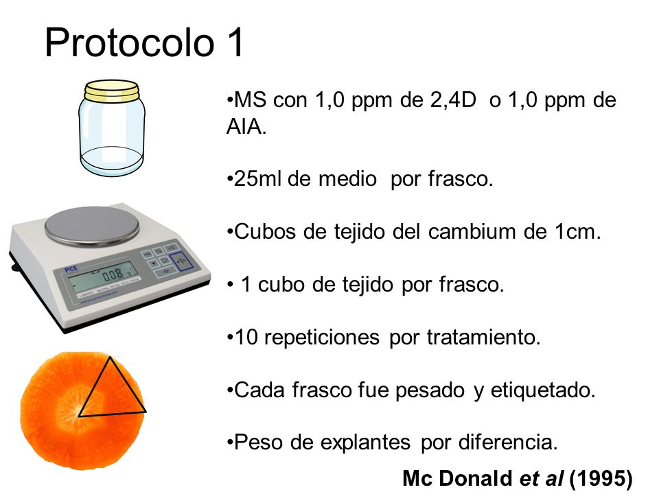 Protocolo 1 MS con 1,0 ppm de 2,4D o 1,0 ppm de AIA.