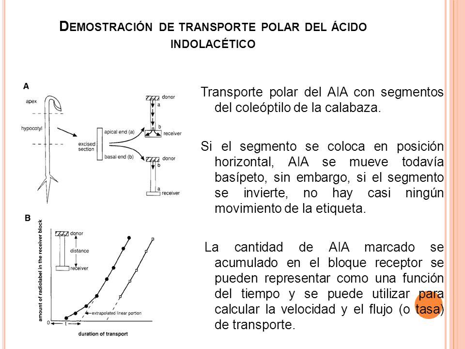 Demostración de transporte polar del ácido indolacético