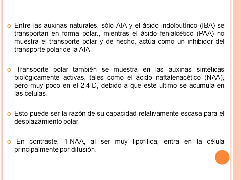 Entre las auxinas naturales, sólo AIA y el ácido indolbutírico (IBA) se transportan en forma polar., mientras el ácido fenialcético (PAA) no muestra el transporte polar y de hecho, actúa como un inhibidor del transporte polar de la AIA.