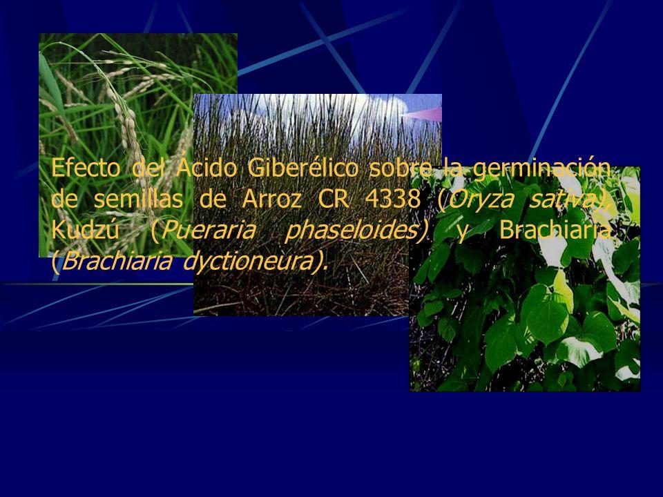Efecto del Ácido Giberélico sobre la germinación de semillas de Arroz CR 4338 (Oryza sativa), Kudzú (Pueraria phaseloides) y Brachiaria (Brachiaria dyctioneura).