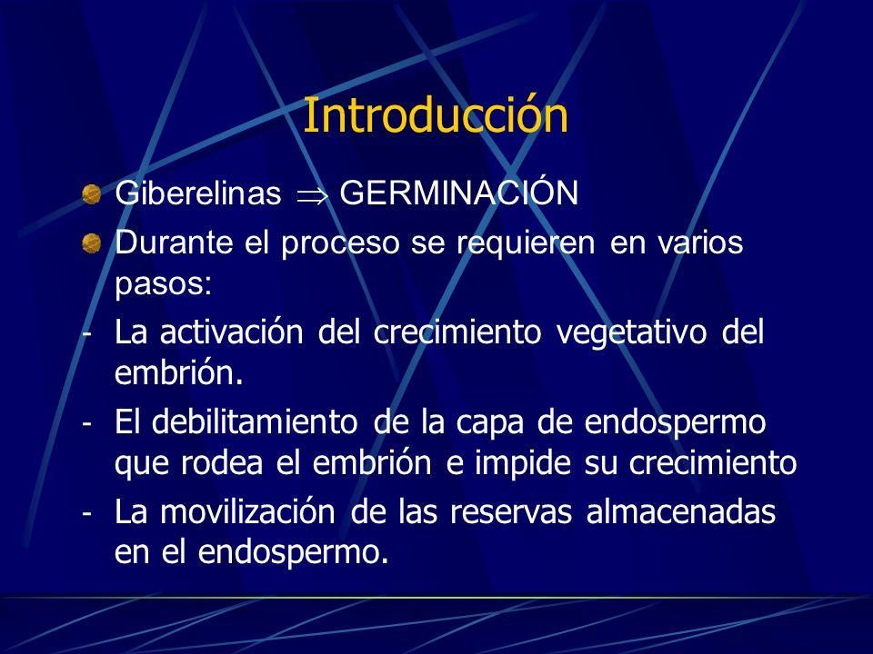 Introducción Giberelinas  GERMINACIÓN