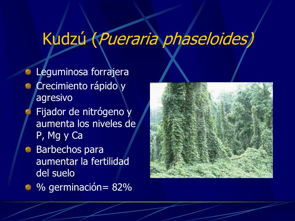 Kudzú (Pueraria phaseloides)