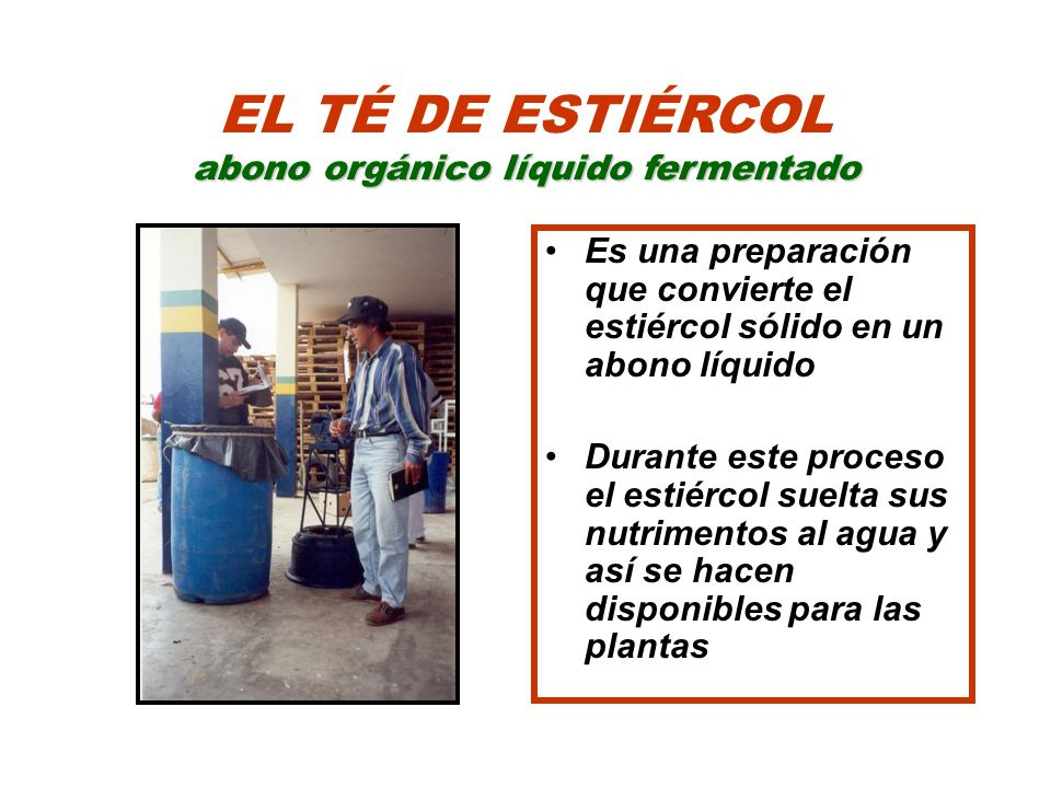 EL TÉ DE ESTIÉRCOL abono orgánico líquido fermentado