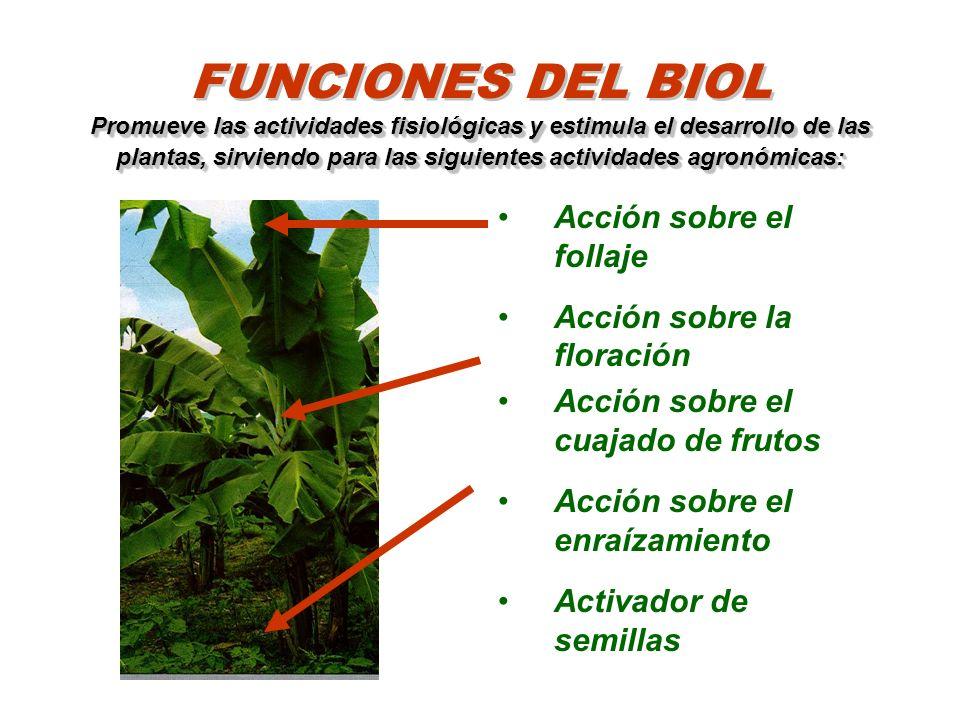 FUNCIONES DEL BIOL Promueve las actividades fisiológicas y estimula el desarrollo de las plantas, sirviendo para las siguientes actividades agronómicas: