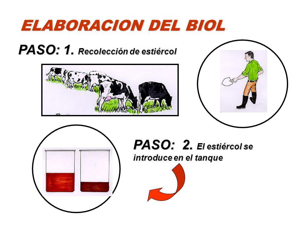 ELABORACION DEL BIOL PASO: 1. Recolección de estiércol