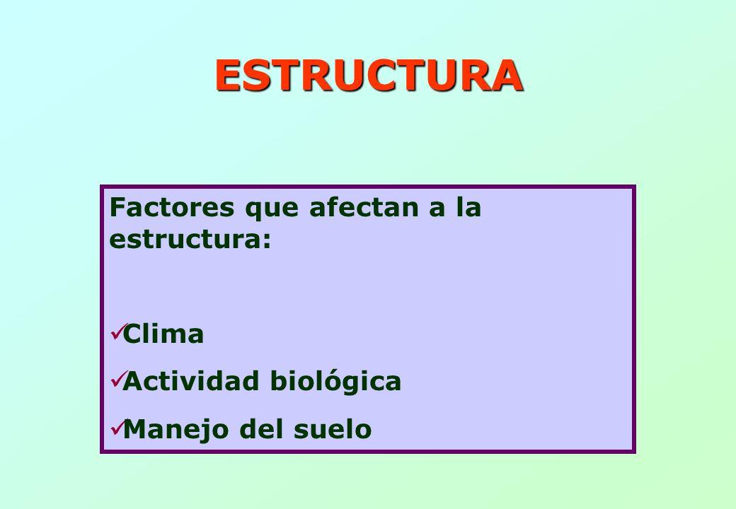 ESTRUCTURA Factores que afectan a la estructura: Clima
