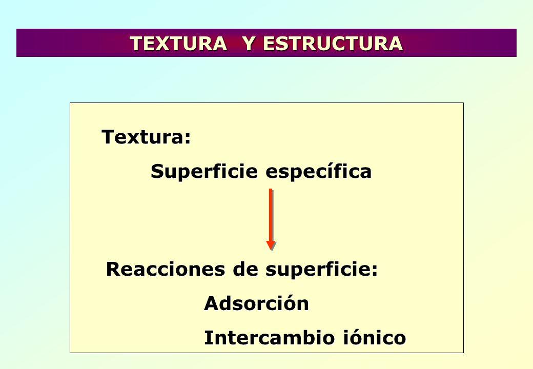 TEXTURA Y ESTRUCTURA Textura: Superficie específica.