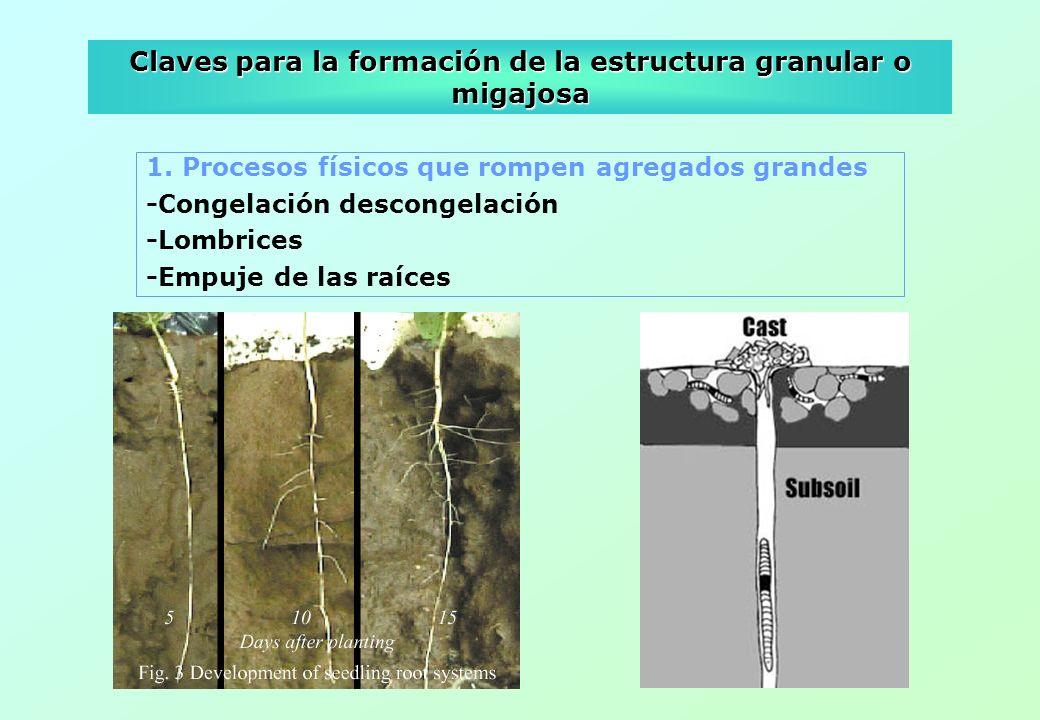 Claves para la formación de la estructura granular o migajosa