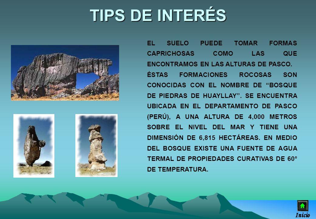 TIPS DE INTERÉSEL SUELO PUEDE TOMAR FORMAS CAPRICHOSAS COMO LAS QUE ENCONTRAMOS EN LAS ALTURAS DE PASCO.