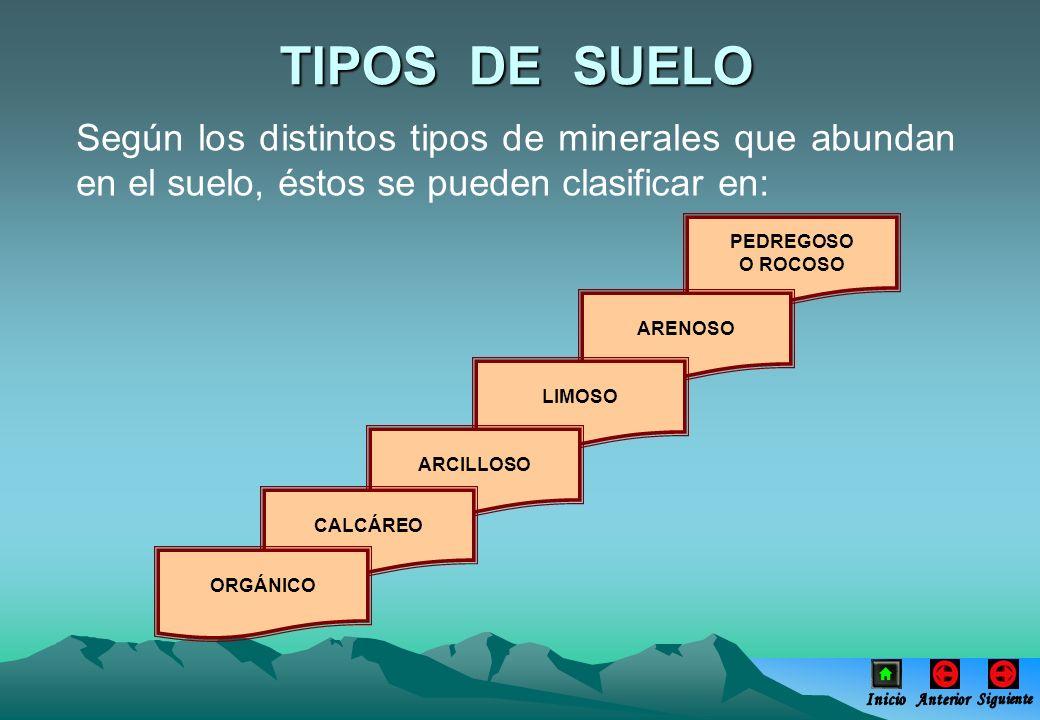 TIPOS DE SUELOSegún los distintos tipos de minerales que abundan en el suelo, éstos se pueden clasificar en: