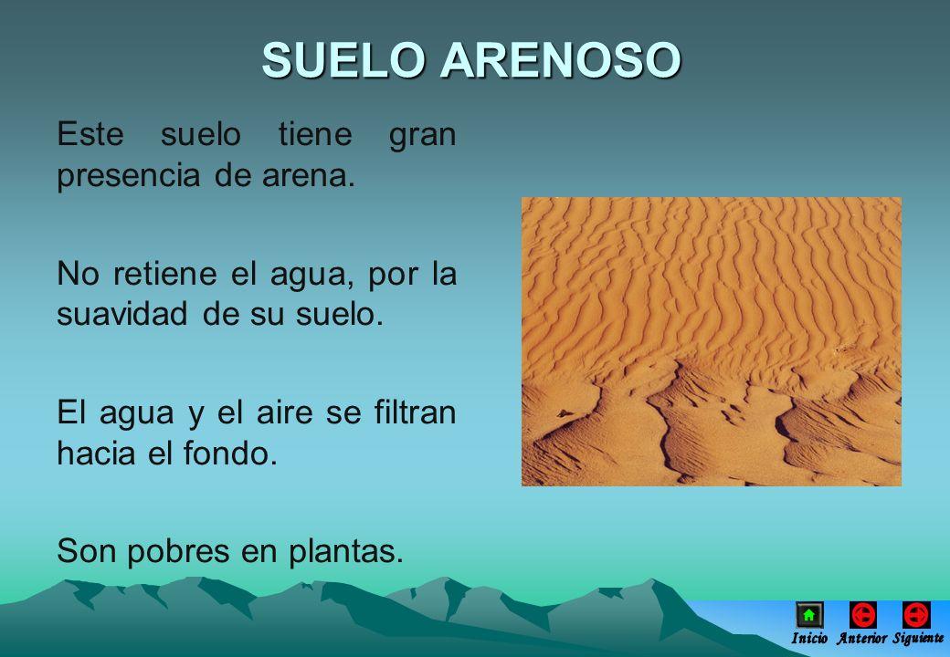 SUELO ARENOSO Este suelo tiene gran presencia de arena.