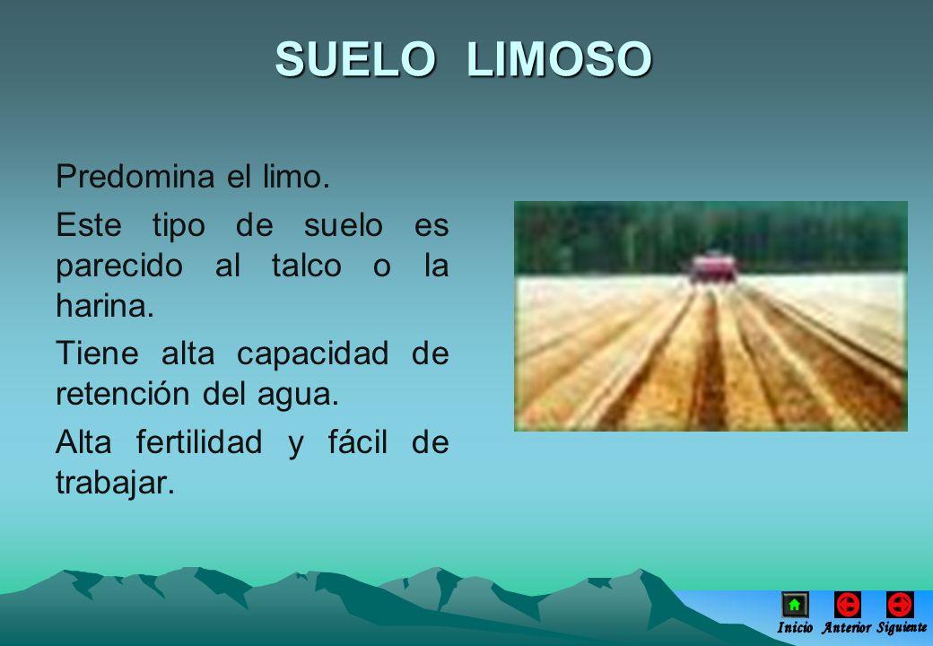 SUELO LIMOSO Predomina el limo.